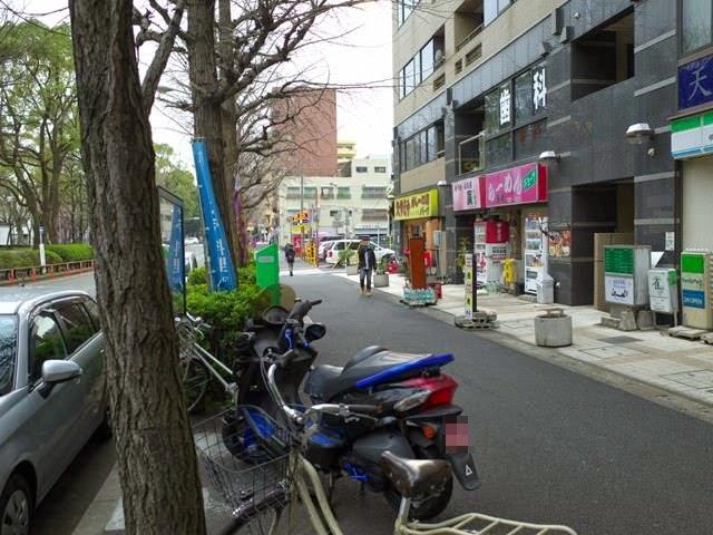 お店の前の並木道の通り