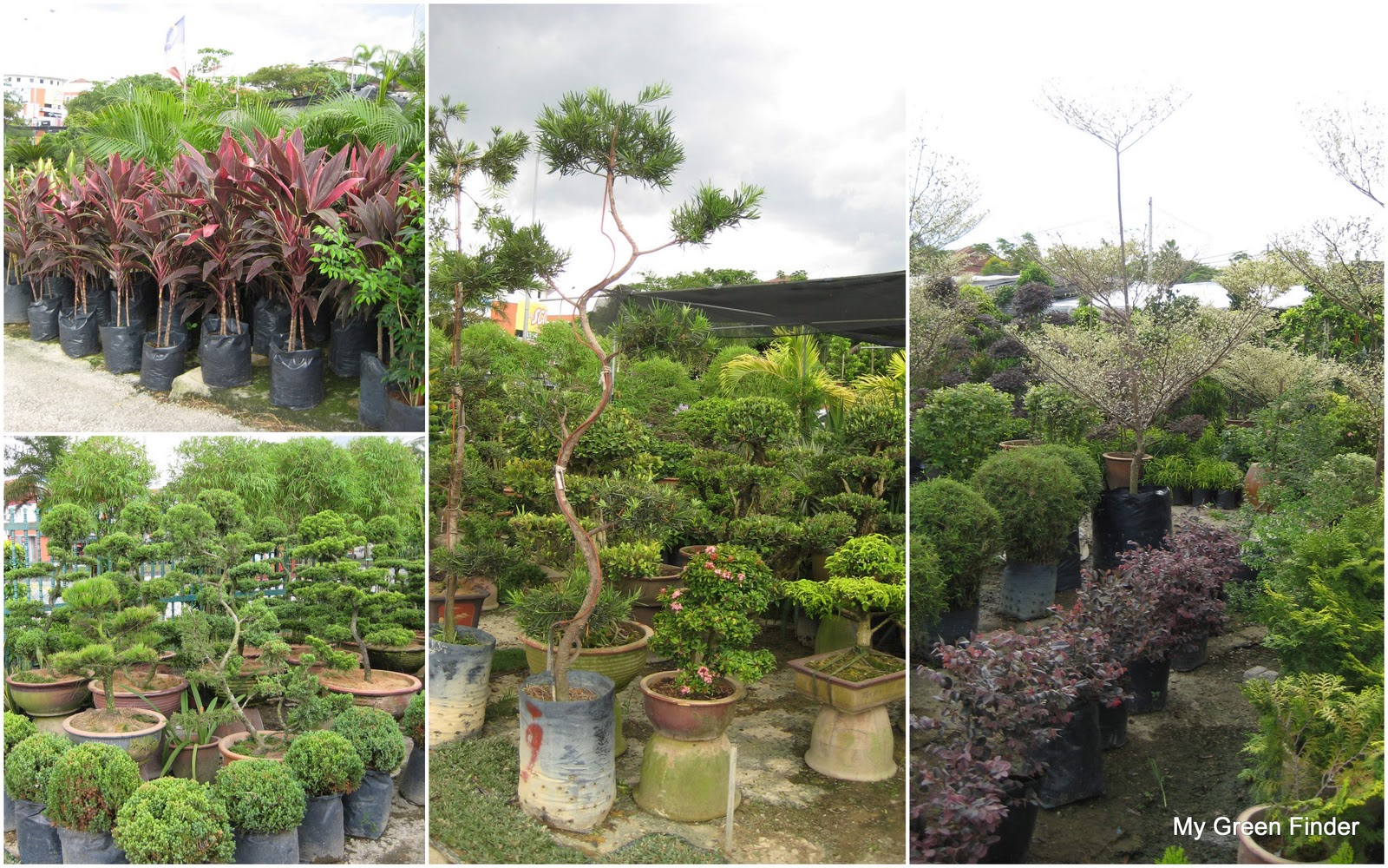 My green finder plant vendors chea ngai hoong nursery for Plant nursery