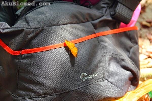 kupu-kupu menghigap diatas bag kamera lowepro