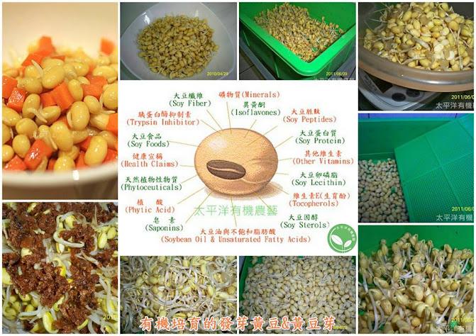 有機催芽黃豆 有機發芽黃豆