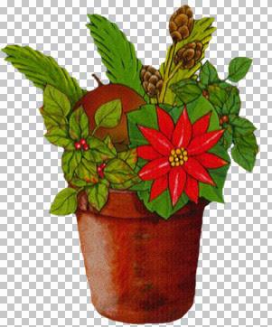 kt_christmas-plant3.jpg