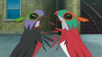 ¡Hawlucha y el Hawlucha oscuro! Pokemon XY