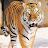 Shahid Anwar avatar image