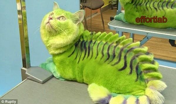 kucing-warna-hijau