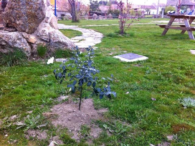 Plantas Sotosalbos