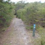 Arrow marker through the heath (104569)