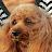 toshio yamaguchi avatar image