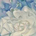 Rosa blanca amb esperó de cavaller no. 2 - G. O'Keefe
