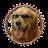 Ricky Marek avatar image
