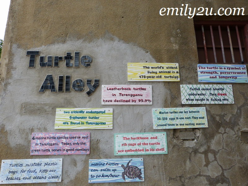 Turtle Alley