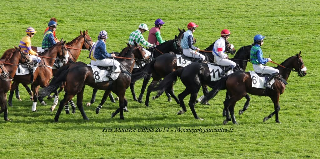 Photos Auteuil 2-11-2014 (48h de l'obstacle) IMG_5445