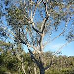 Trees on Wilkin's Track (307526)