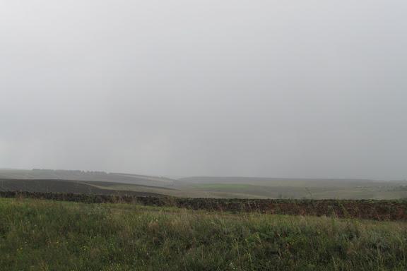 дождь в поле