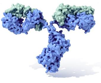 Inmunoglobulina