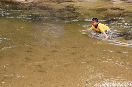 ikan sungai chiling