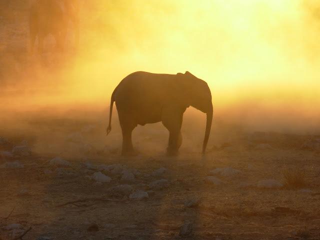 أفضل ما في أفريقيا  Best of Africa Namibia_180807173300