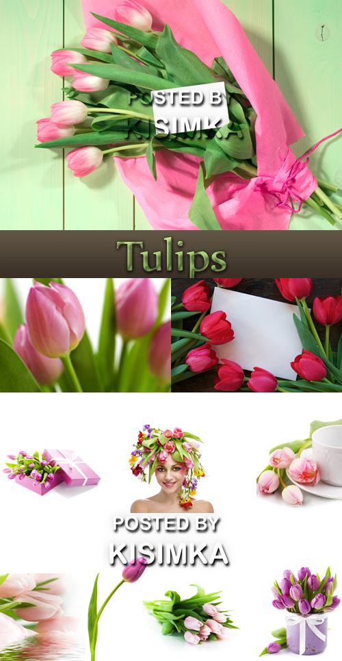 Stock Photo: Variety of tulips