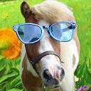 Ponykass
