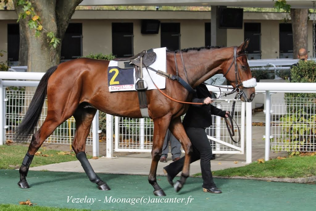 Photos Auteuil 2-11-2014 (48h de l'obstacle) IMG_5235