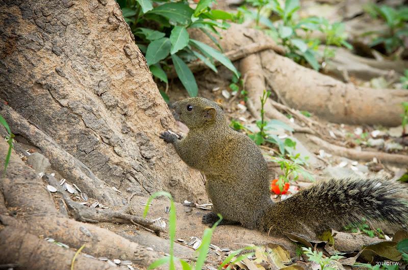 台南公園打鼠去