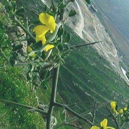Ali Azzam picture