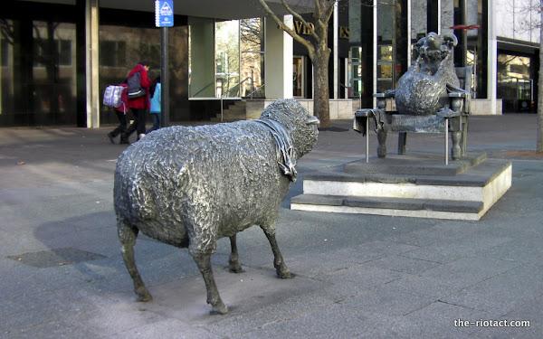 sheep returned