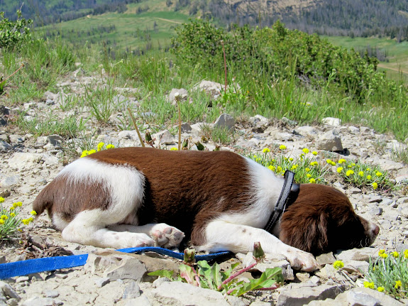 Boulder sleeping at the summit