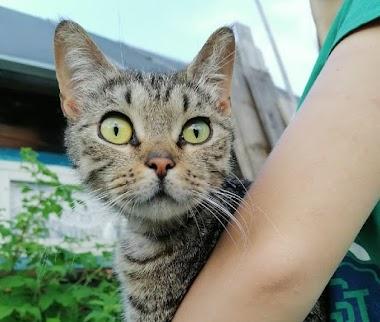 Кошка Тигрица