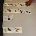 This lesson combines zoology with geography, as the Montessori child arranges animals by the continents they live in.