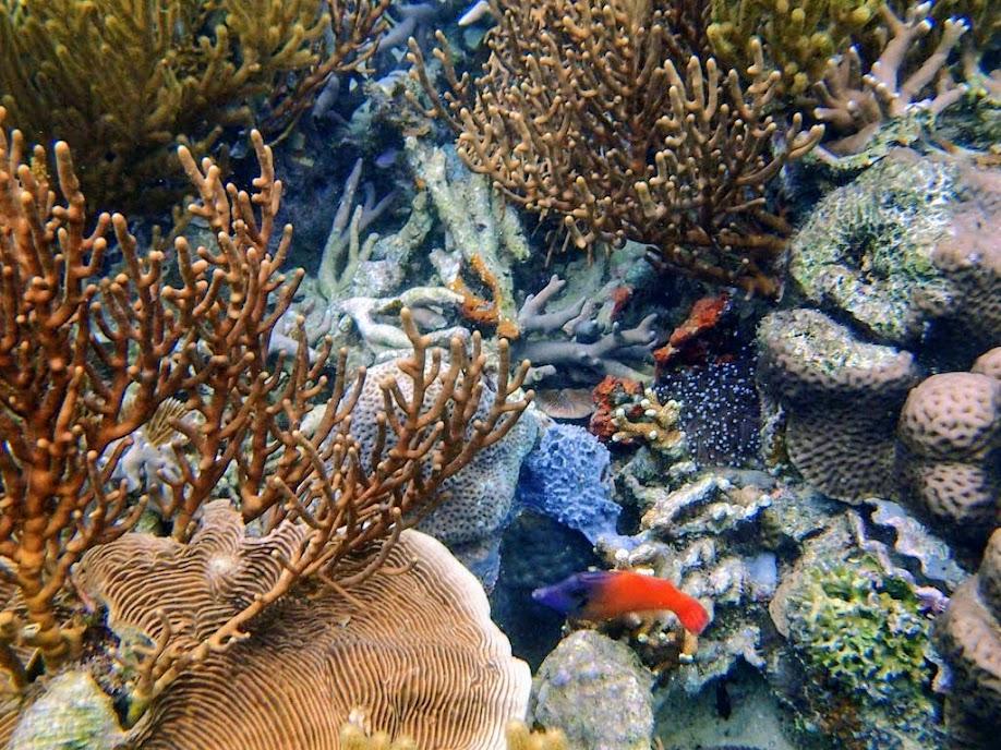 Pervagor melanocephalus (Blackheaded Filefish), Lusong Island, Coral Garden Reef, Palawan, Philippines.