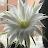 Gillian Parr avatar image