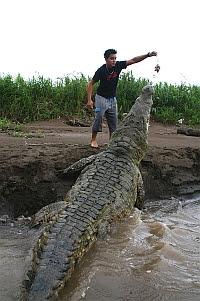 Questões e Fatos sobre Crocodilianos gigantes: Transferência de debate da comunidade Conflitos Selvagens.  - Página 2 124