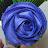 kfm22379 avatar image
