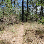 Warri Warri Track (235928)