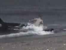 حوت يبتلع شابا على الشاطى