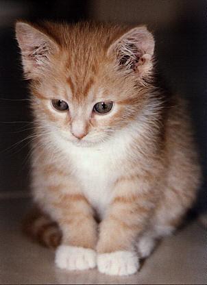 kucingku 7