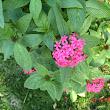 37 zákutia záhrady oživovali kvitnúce kry so žiarivými kvetmi.JPG