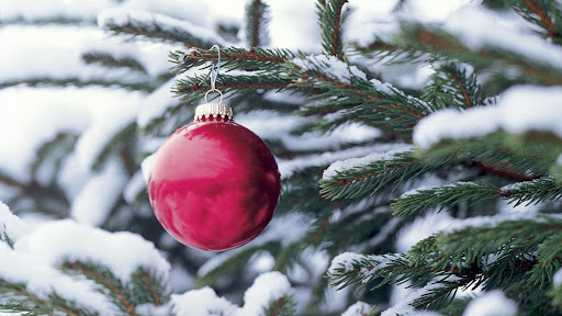 Red Ornament on Tree.jpg