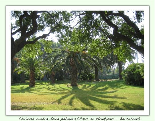 Curiosa ombra de palmera