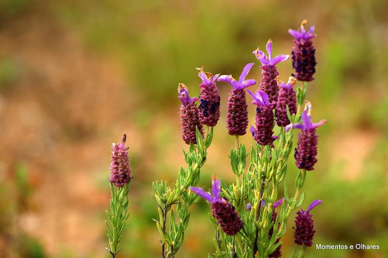 Arrábida, Flores silvestres