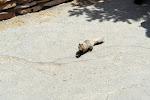 Ein rauchendes Eichhörnchen? ;-)