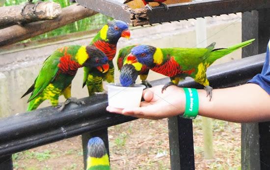 Taman-Burung-Kuala-Lumpur-Bird-Park