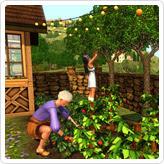 Богемные фрукты и орехи
