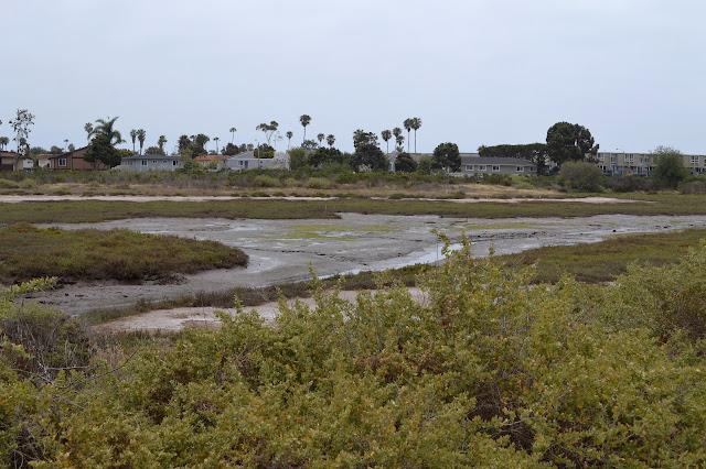 muddy flats of the salt marsh