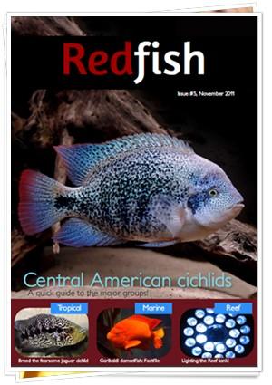 RedFish Magazine 5
