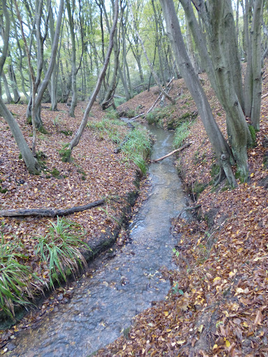 Stream running through Bayford wood