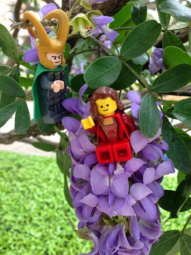 shrub-sophora2.jpg