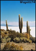Un mois aux pays des Incas, lamas et condors (Pérou-Bolivie) - Page 3 CD3%2520%252810%2529
