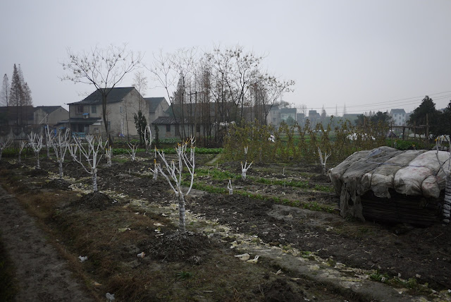 a country-like scene in the middle of Shaoxing, Zhejiang province, China