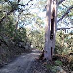 Pacific Trail (204781)